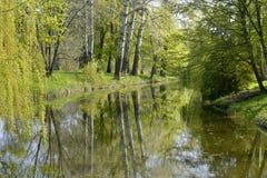 Primavera de los árboles Foto de archivo libre de regalías