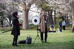 primavera 2019 de los cerezos fotografía de archivo