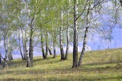 Primavera de madera en mayo Imágenes de archivo libres de regalías