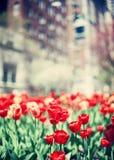 Primavera de New York City Fotos de archivo