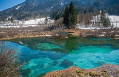 Primavera de Sava, Zelenci, Eslovenia Fotos de archivo libres de regalías