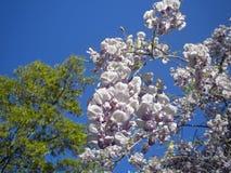 Primavera debajo de Carolina Blue Sky Foto de archivo