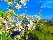 Primavera del árbol fotografía de archivo