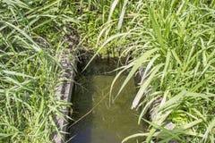 Primavera del agua en el medio del arbusto Imagenes de archivo