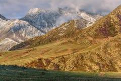 Primavera del amanecer de la nieve del rododendro de las montañas Imagen de archivo libre de regalías