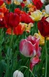 Primavera del arco iris Imagen de archivo libre de regalías