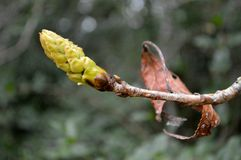 Primavera del brote del árbol Imagenes de archivo
