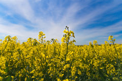 Primavera del cielo Fotos de archivo libres de regalías
