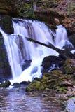 Primavera del fiume Bistrica nel tempo di autunno Immagini Stock Libere da Diritti