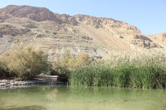 Primavera del oasis en Ein Fashkha, oasis de la reserva natural de Einot Tzukim en la Tierra Santa Imagenes de archivo