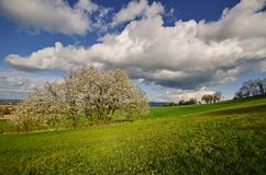 Primavera del pendio di collina Immagini Stock