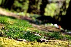 Primavera del verde de hierba Imágenes de archivo libres de regalías