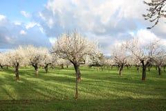 Primavera dell'isola di Maiorca, Spagna Fotografia Stock
