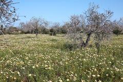 Primavera dell'isola di Maiorca, Spagna Fotografia Stock Libera da Diritti
