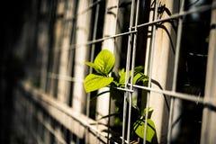 In primavera delle piante Immagine Stock