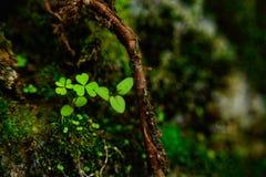 Primavera di bello fiore fotografia stock