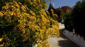 Primavera di Creta fotografie stock libere da diritti