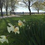 Primavera di Greenlake Seattle fotografia stock libera da diritti