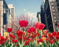 Primavera di New York Fotografia Stock