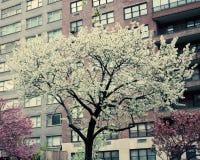 Primavera di New York Immagine Stock