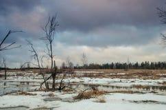 Primavera di paesaggio con lo stagno Fotografie Stock Libere da Diritti