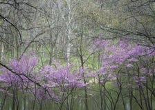 Primavera di Sterling Pond Fotografia Stock Libera da Diritti