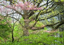 Primavera di Sweetwater Fotografie Stock