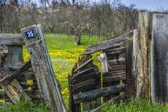 Primavera dietro il portone Immagini Stock