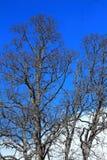 Primavera, dopo l'inverno, cielo blu, chiaro cielo Immagine Stock Libera da Diritti