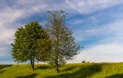 Primavera - dos árboles fotos de archivo