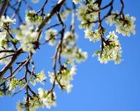 Primavera e fiori Fotografia Stock Libera da Diritti