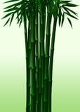 Primavera ed autunno di bambù verdi Illustrazione Vettoriale