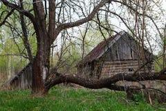 Primavera, el manzano viejo en un fondo del vill destruido Fotos de archivo