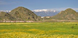 Primavera em Hemet, Califórnia Imagens de Stock Royalty Free