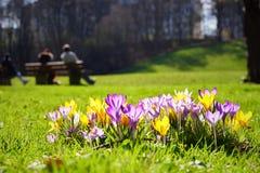 Primavera em Munich Imagem de Stock