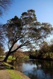 Primavera em Nova Zelândia fotos de stock royalty free