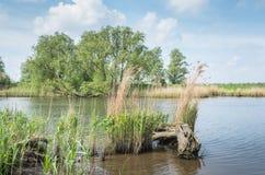 primavera em um parque nacional holandês Foto de Stock