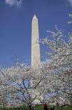 primavera em Washington, C.C. Imagens de Stock Royalty Free