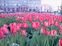 Primavera en Boston Imágenes de archivo libres de regalías