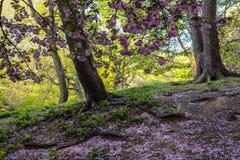 Primavera en Central Park foto de archivo