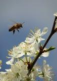 Primavera ¡en el último! Fotografía de archivo