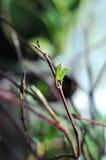 Primavera en el alféizar Fotografía de archivo
