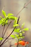 Primavera en el alféizar fotos de archivo