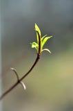 Primavera en el alféizar foto de archivo libre de regalías