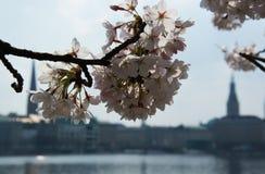 Primavera en el Alster Fotografía de archivo libre de regalías