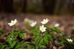 Primavera en el bosque. Foto de archivo