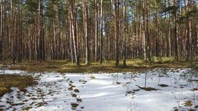 Primavera en el bosque Imagen de archivo libre de regalías