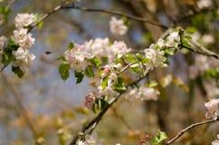 Primavera en el bosque Imágenes de archivo libres de regalías