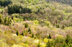Primavera en el bosque Foto de archivo libre de regalías