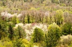 Primavera en el bosque Fotografía de archivo